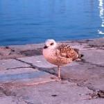 Ostrov Krk – fauna a flóra