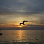 Víte, jaké je typické počasí na chorvatském ostrově Vir? Celoroční předpověď pro vás!